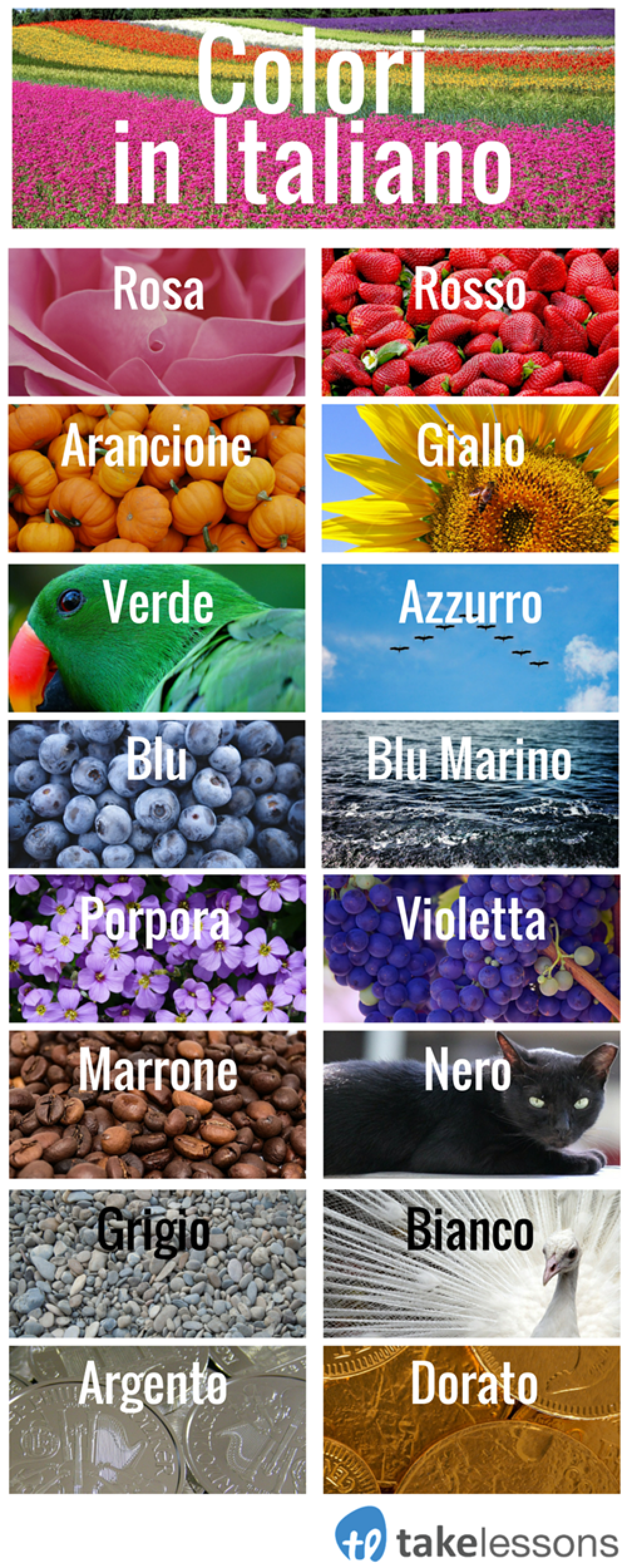 Colors in Italian  Infographic