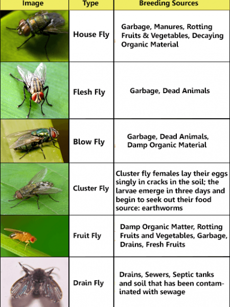 Common Fly Identification Chart Infographic