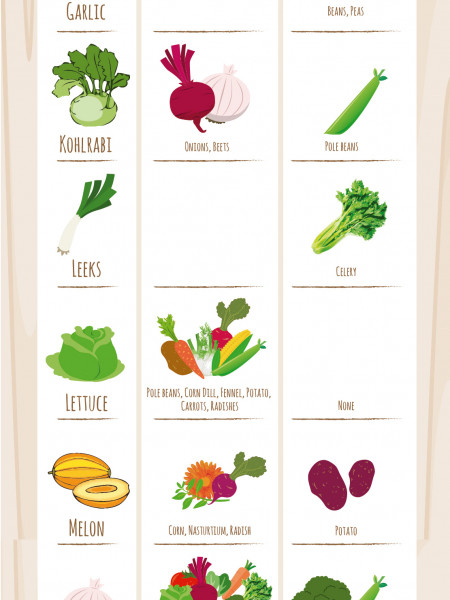 Gardening: Companion Planting Guide & Vegetable Best Friends Planting Suggestions Infographic