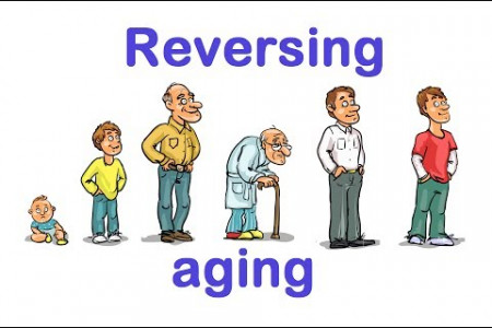 Could Aging Be Reversed?  Infographic