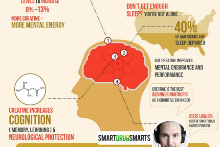 Creatine for Your Brain, Bro Infographic