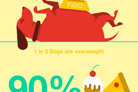 Creative Canine Fitness Infographic