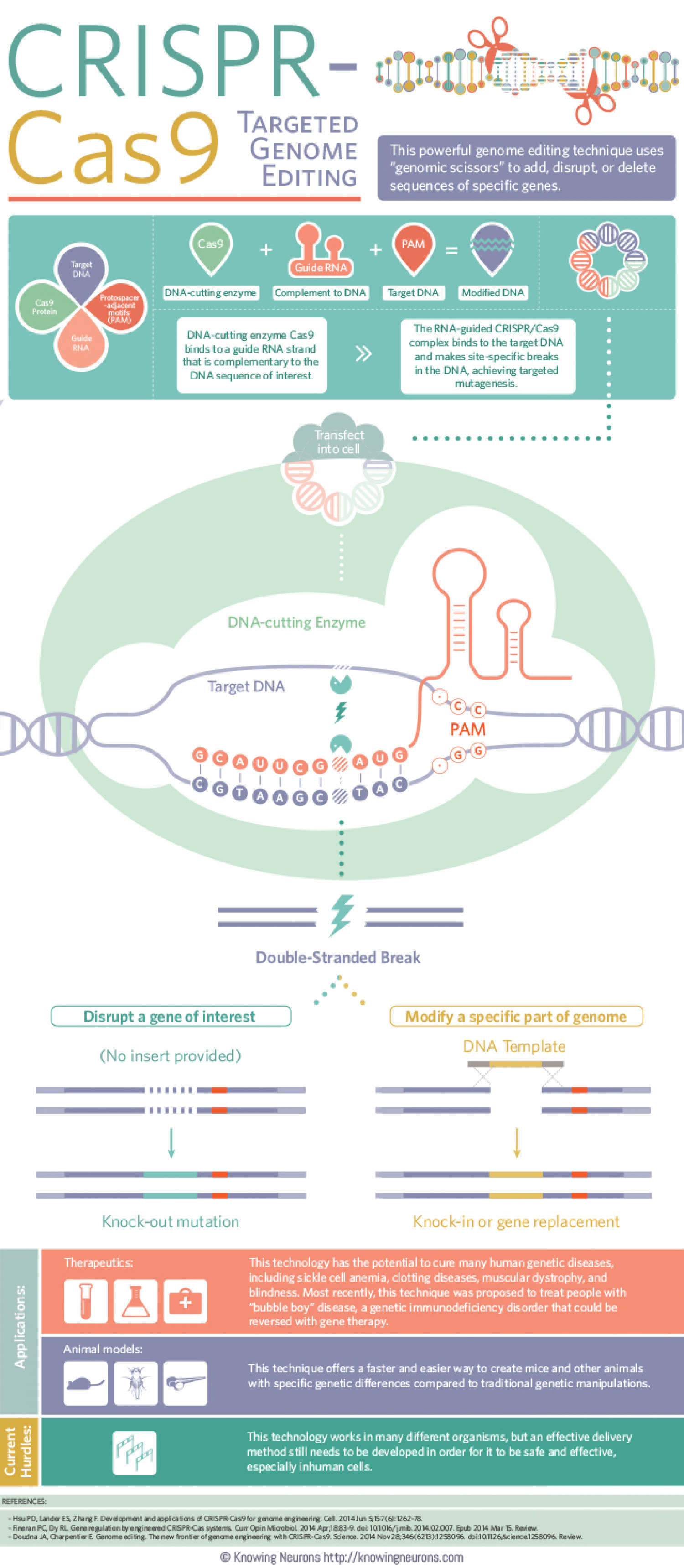 CRISPR-Cas9: Targeted Genome Editing Infographic