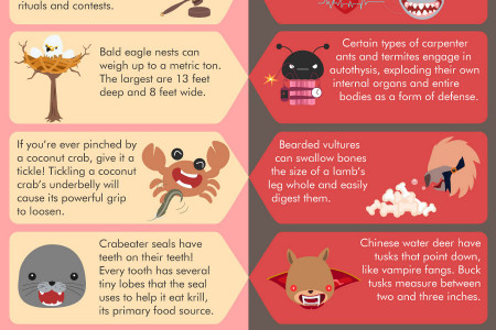 Cute vs Terrifying Facts About Animals Infographic