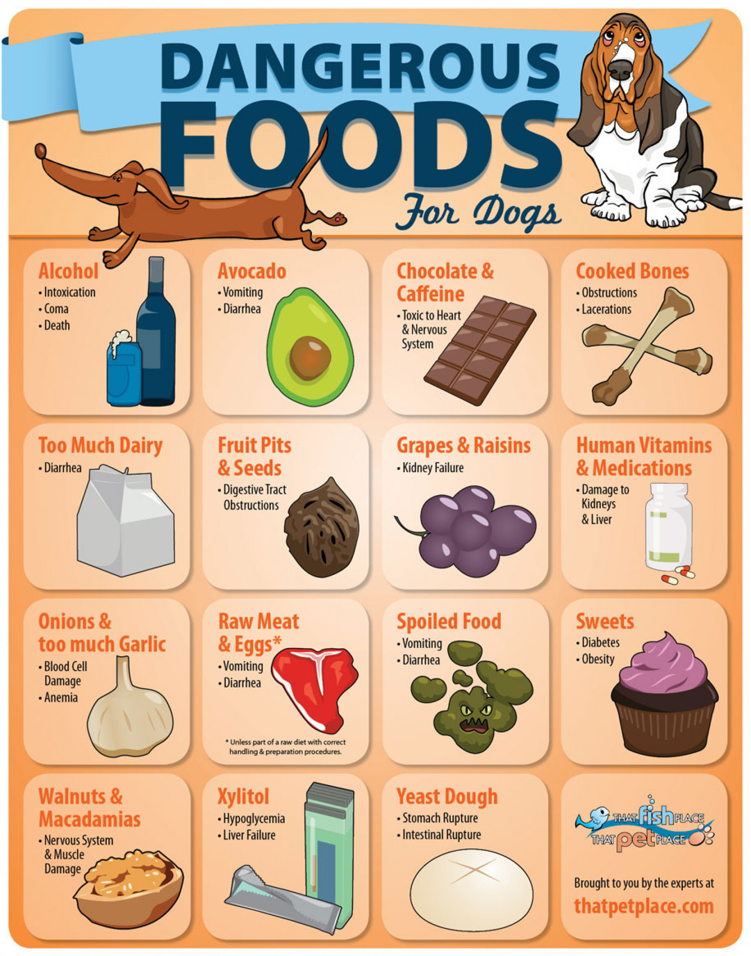 Safe And Unsafe Foods For Cats