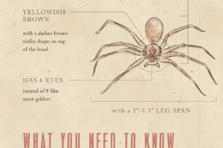 Dangerous Spiders in North America Infographic