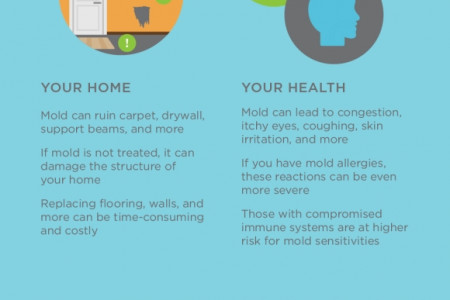 Dealing with Mold Before It's Too Late  Infographic