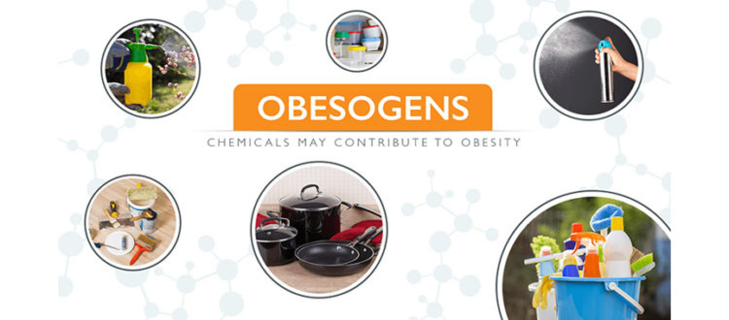 Defining Obesogens: The Chemicals Impact & Presence in the Household Infographic