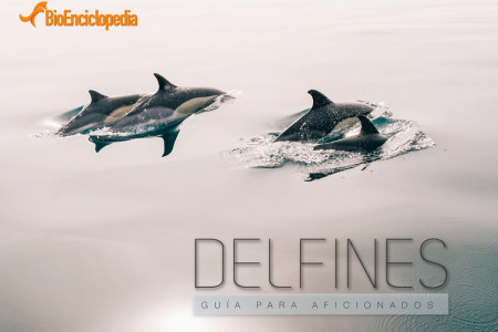 Delfines Ebook Infographic