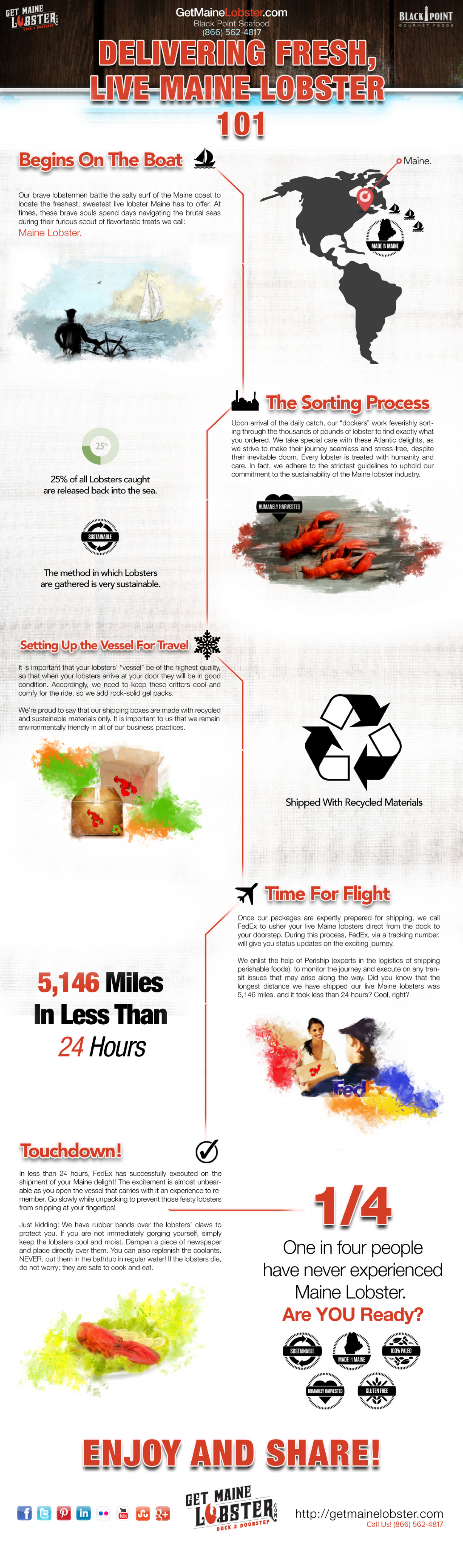 Delivering Live Maine Lobster 101 Infographic