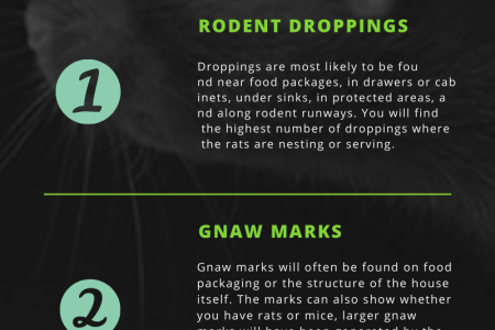 Detection & Prevention of Rat Infestation Infographic