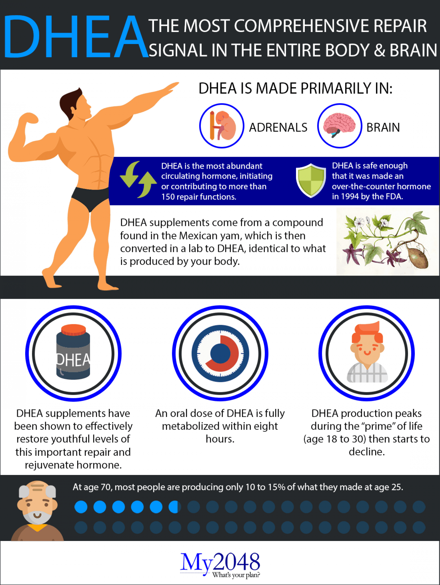DHEA: The most comprehensive repair signal in the entire body and brain Infographic