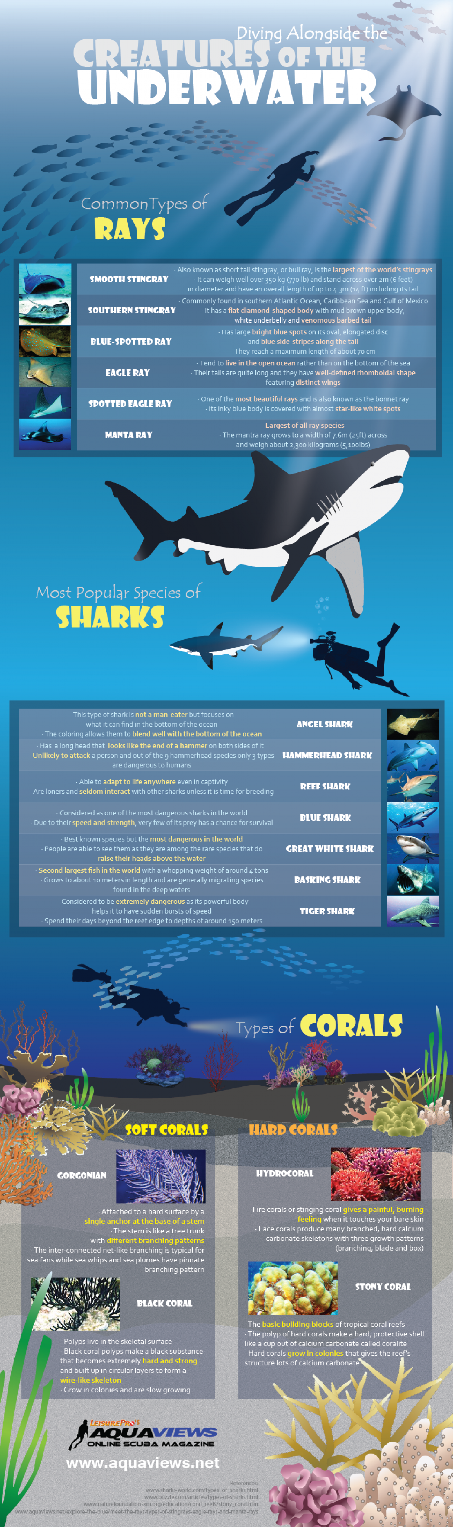 Diving Alongside the Creatures of The Underwater Infographic