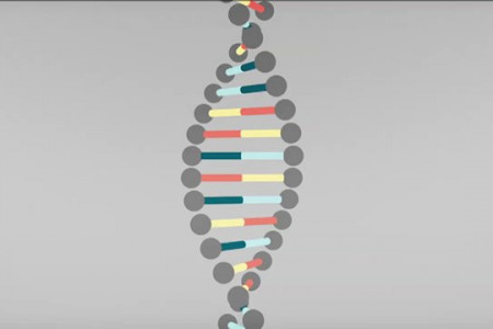 DNA Explained Infographic