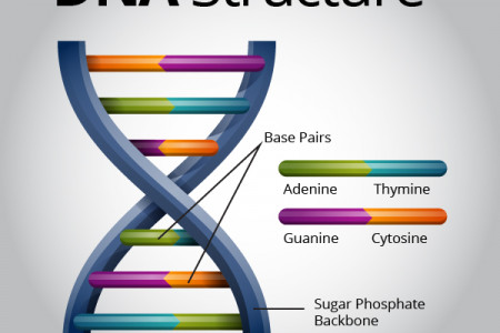 DNA Structure Infographic