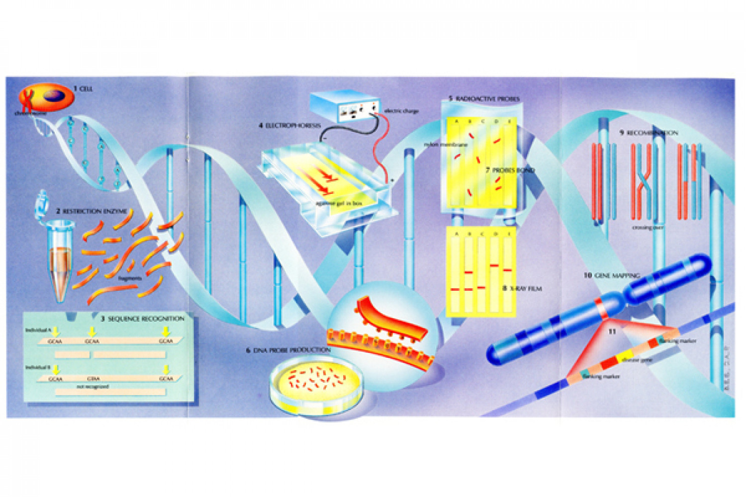 DNA Testing Infographic