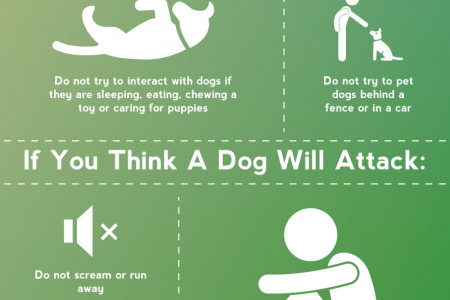 Dog Bites 101 Infographic