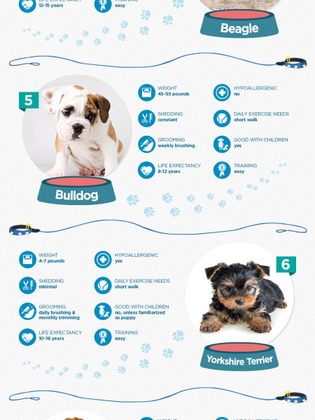 Dog Breed Bark-down: The 10 Most Popular Dogs Infographic