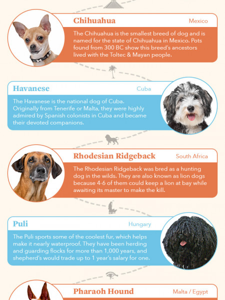 Dog Breeds of the World Infographic