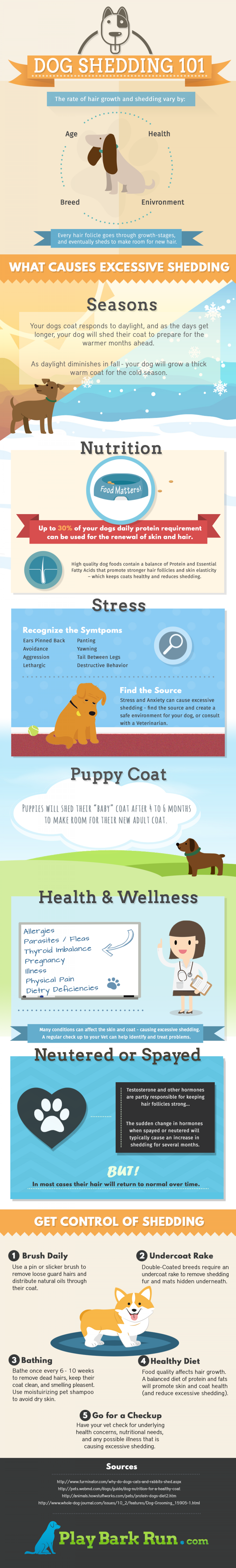 Dog Shedding 101: Quick Guide to Pet Hair Infographic