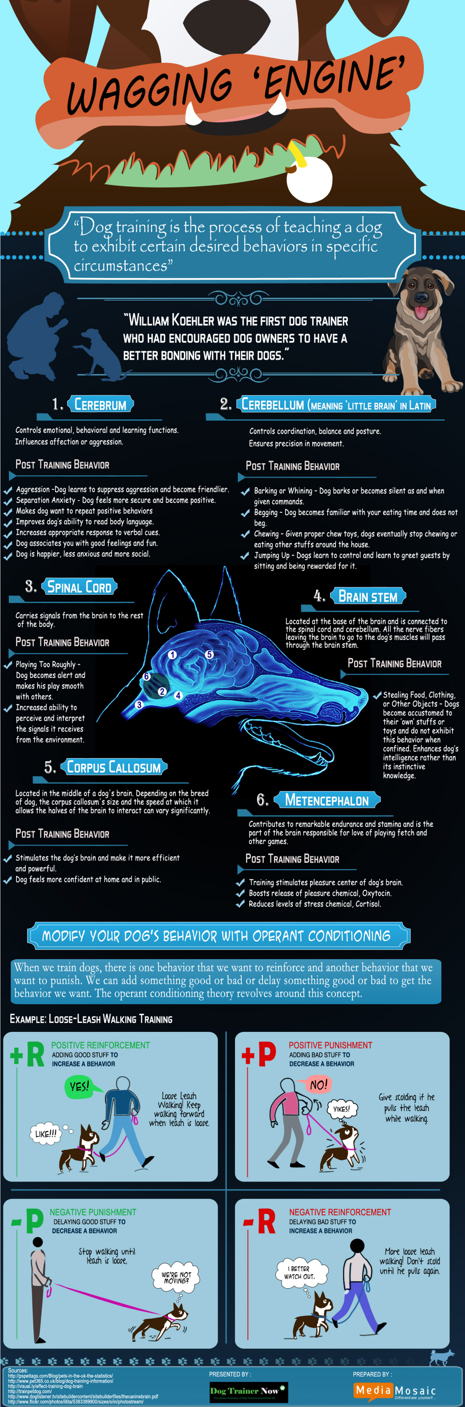 Dog Training : How This Wagging Engine Works! Infographic