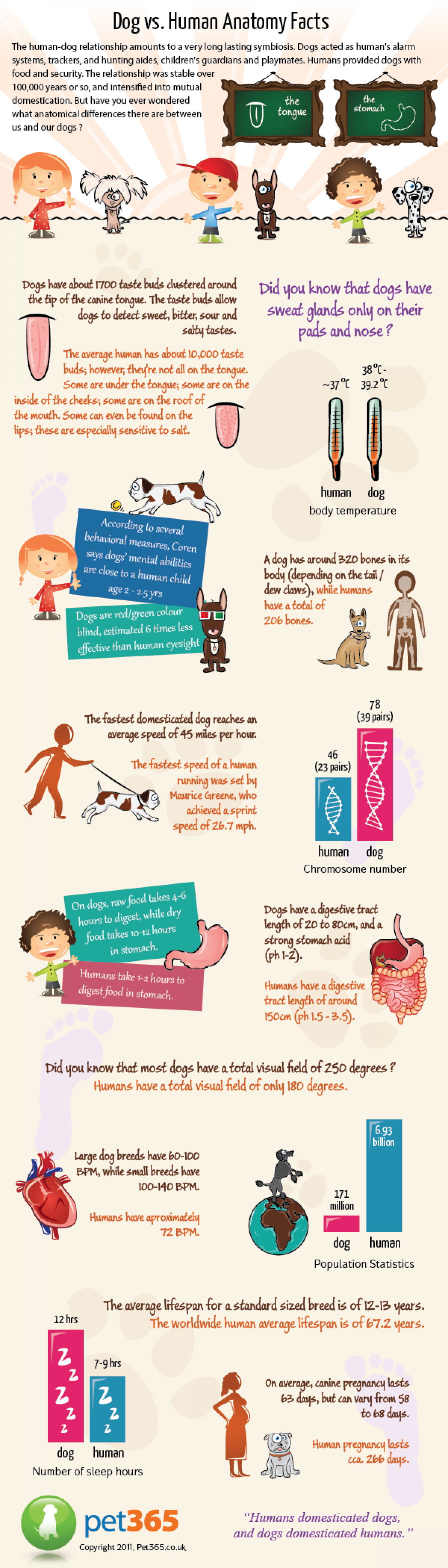 Dog vs Human Anatomy | Visual.ly