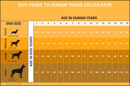 Dog years to human years infographics Infographic
