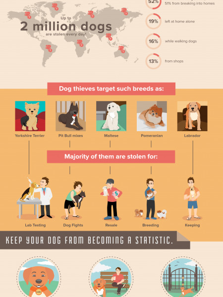 Dognapped: Dog Theft and How to Prevent It Infographic