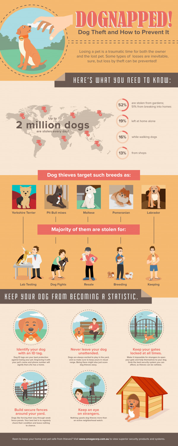 Dognapped: Dog Theft and How to Prevent It