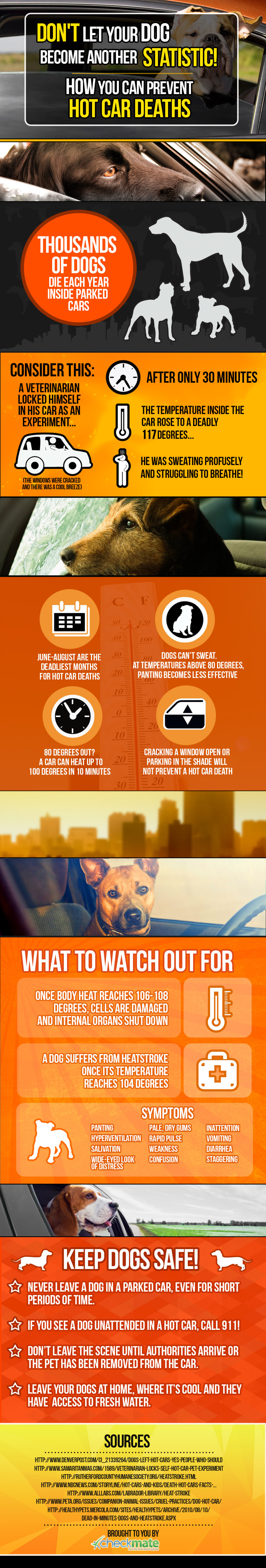 Dogs Are Dying In Hot Cars: Here's How You Can Help Save Them Infographic
