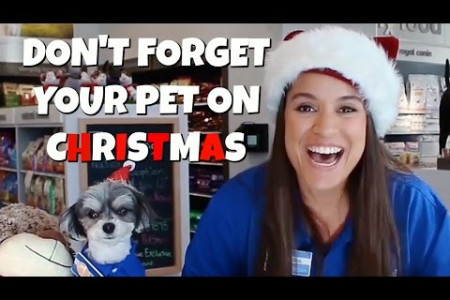 Don't Forget Your Pet On Christmas - Gina Naomi Baez (Official Music Video) Infographic