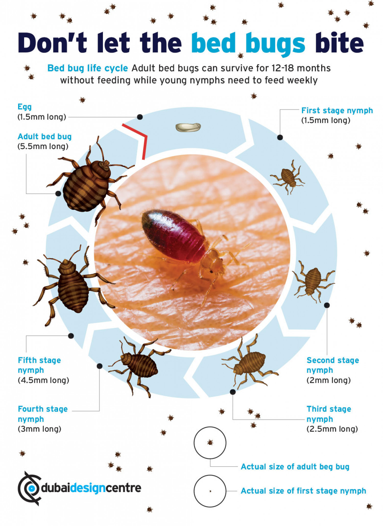 Bed Bugs Infographics Visual Ly