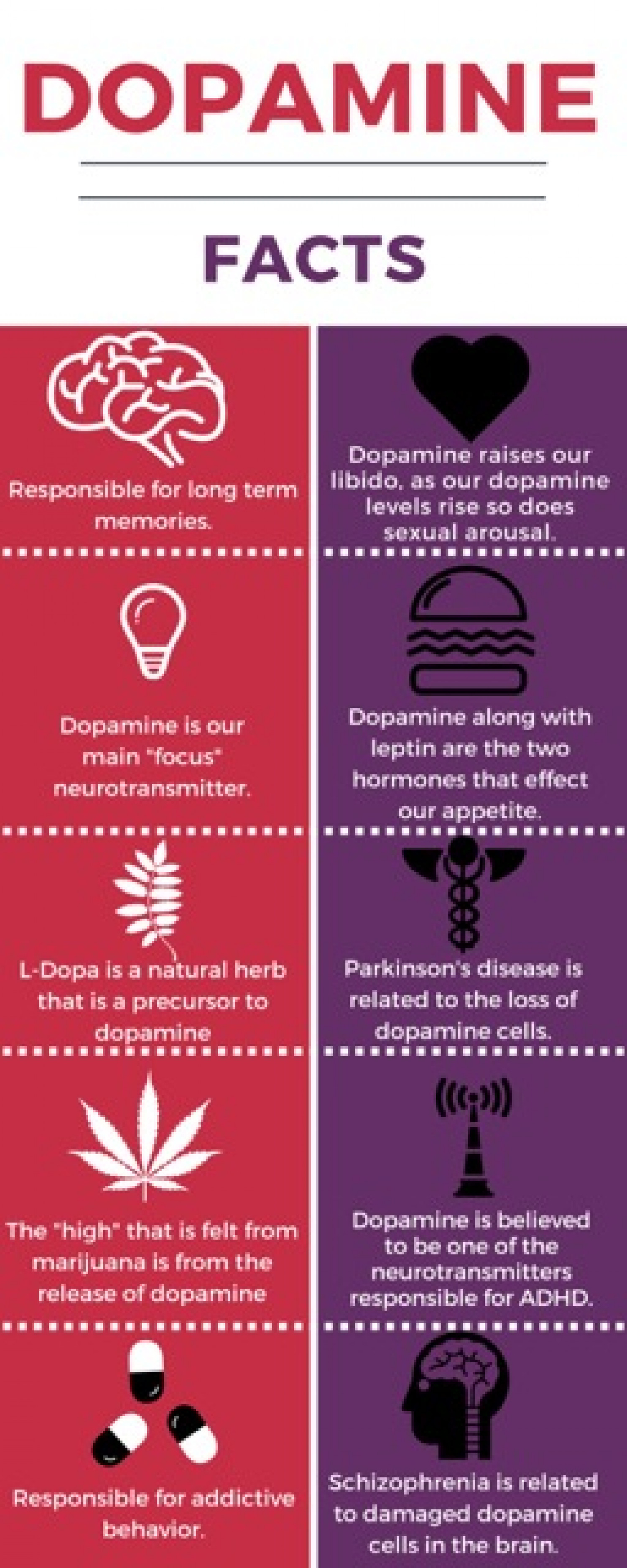 Dopamine facts Infographic Infographic