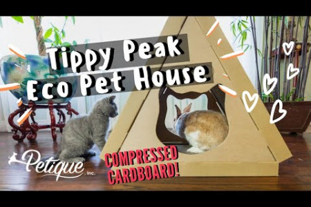Eco-house for the best Feline Infographic