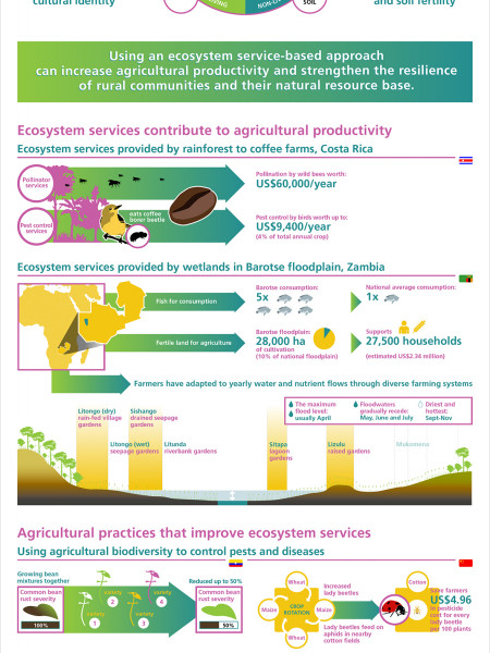 Ecosystem Services and Resilience Infographic