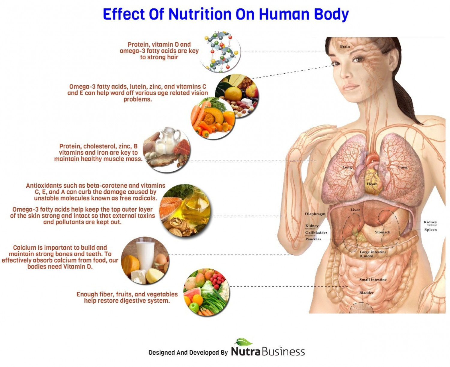 Effect Of Nutrition On Human Body | Visual.ly