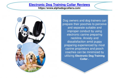 Electronic Dog Training Collar Reviews Infographic