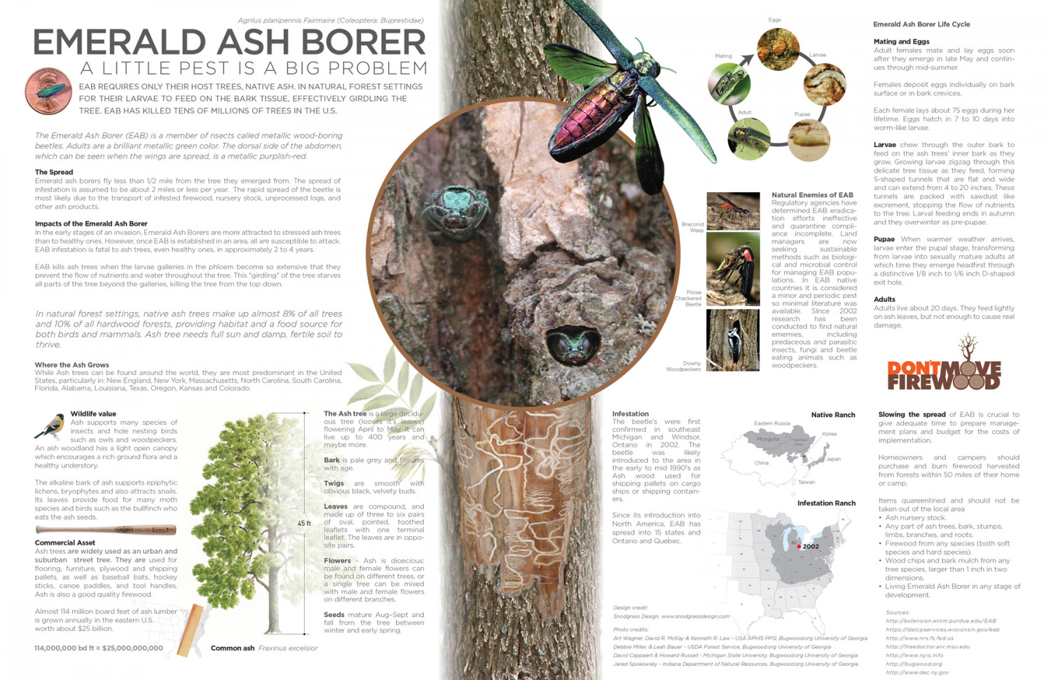 research project emerald ash borer Melissa k fierke associate professor i have been working on the biological control of emerald ash borer(eab) my research project is releasing parasitoid and.