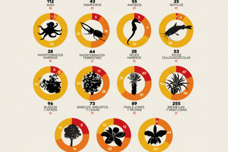 Endangered Species Infographics Visual