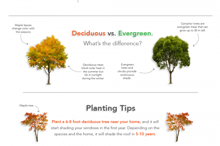 Energy Saver 101: Landscaping Infographic