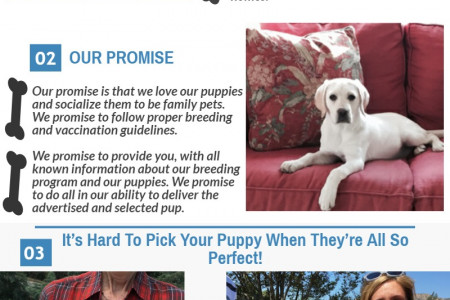 English Labrador Breeders in Southern California Infographic