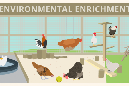Environmental Enrichment for Poultry Infographic