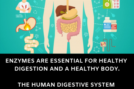 Enzymes Are Essential For Healthy Digestion And A Healthy Body Infographic