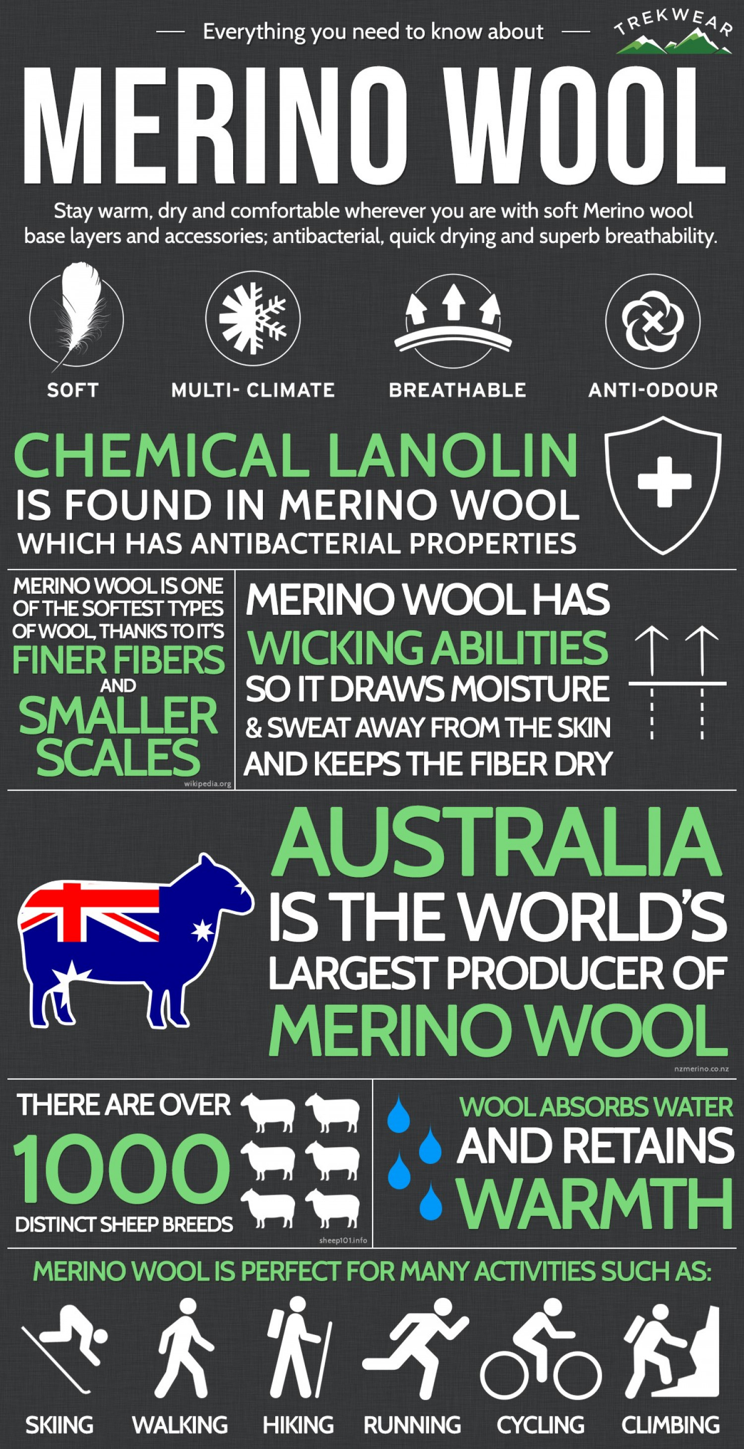 Everything you need to know about Merino Wool.  Infographic