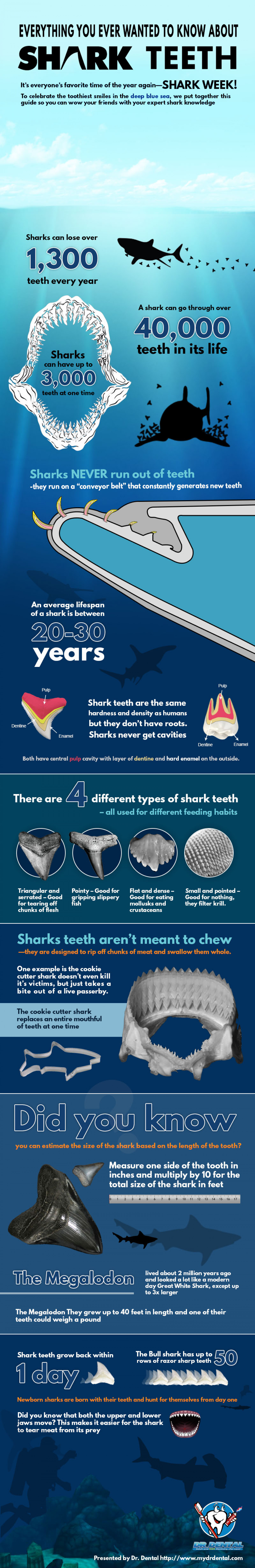 Everything You Wanted to Know About Shark Teeth Infographic