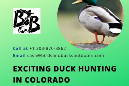 Exciting Duck Hunting Colorado Infographic