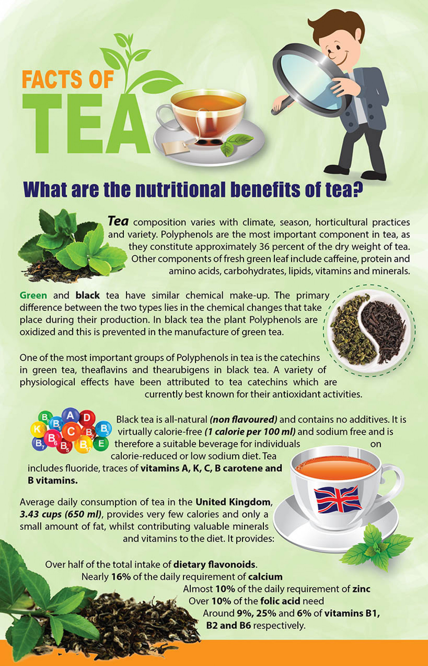 Facts of Tea - What are the nutritional benefits of tea? Infographic