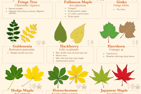 Fall Leaf Identification Guide Infographic