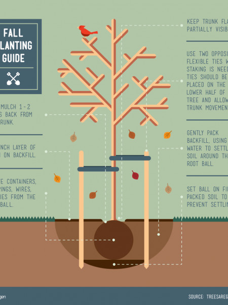Fall Tree Planting Guide Infographic