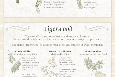 Fascinating Facts About Your Wood Deck Infographic